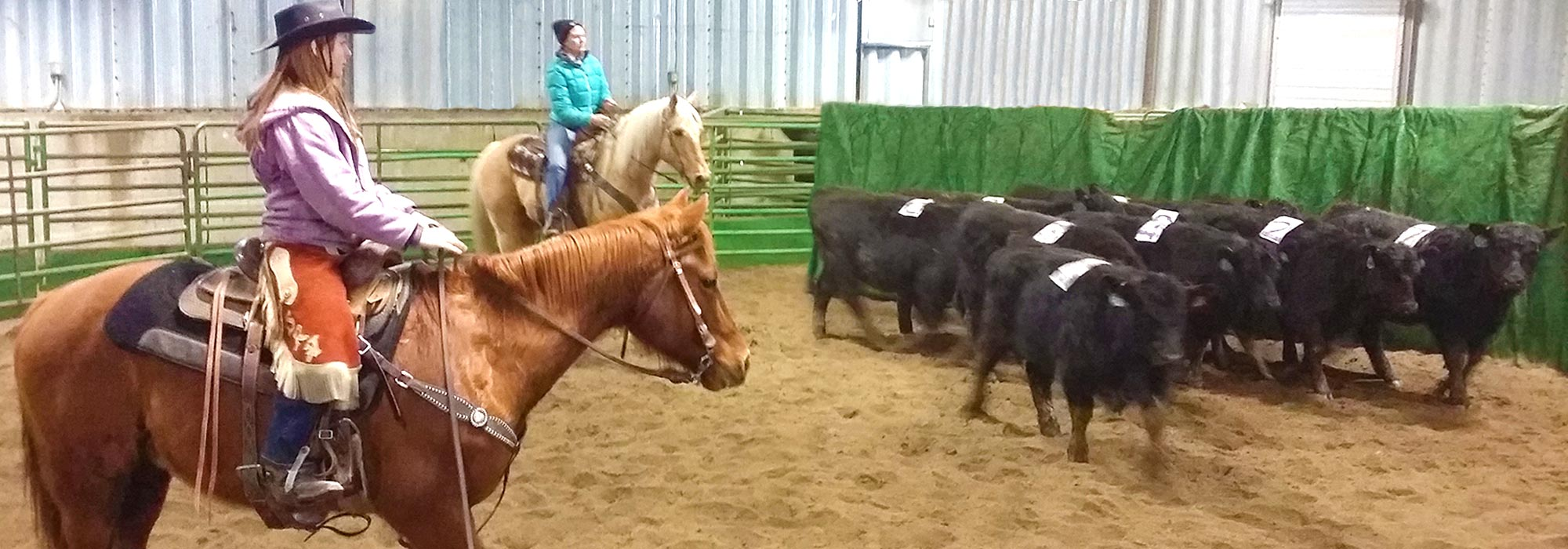Ranch Sorting Competition